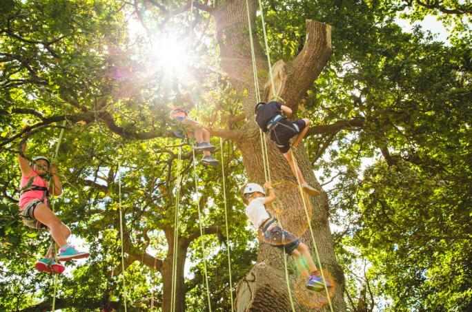 campbestival_dinglydell_treeclimbing_adam1616-3-21474452534